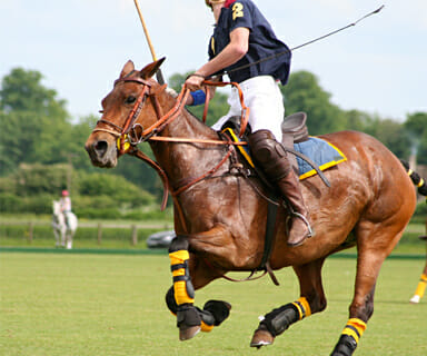 Polo is near Woodlands of Charlottesville