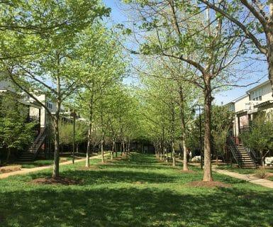 Beautiful and peaceful courtyard