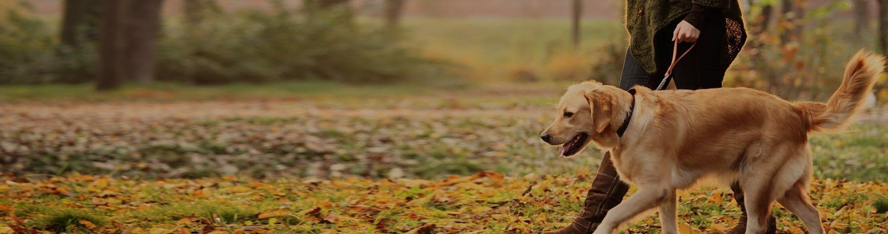 Pet Policy - Woodlands Pet Friendly Condo Rentals